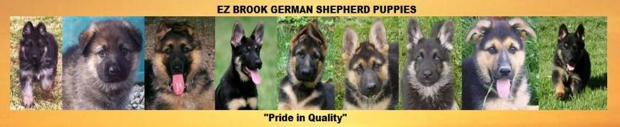 german shepherd puppies for sale breeder ez brook